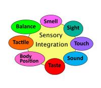 sensory chart4